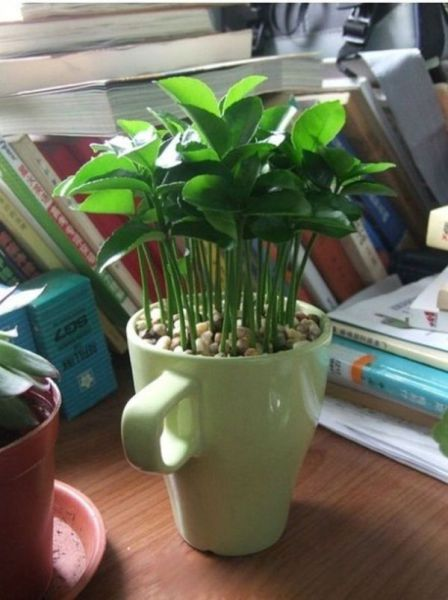 how_to_grow_your_own_lemon_tree-9
