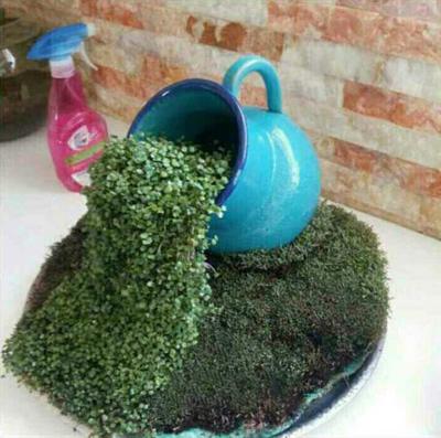 آموزش کاشت سبزه آبشاري